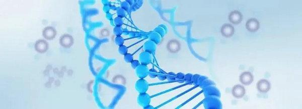 关于胚胎染色体,你需要了解的几个真相